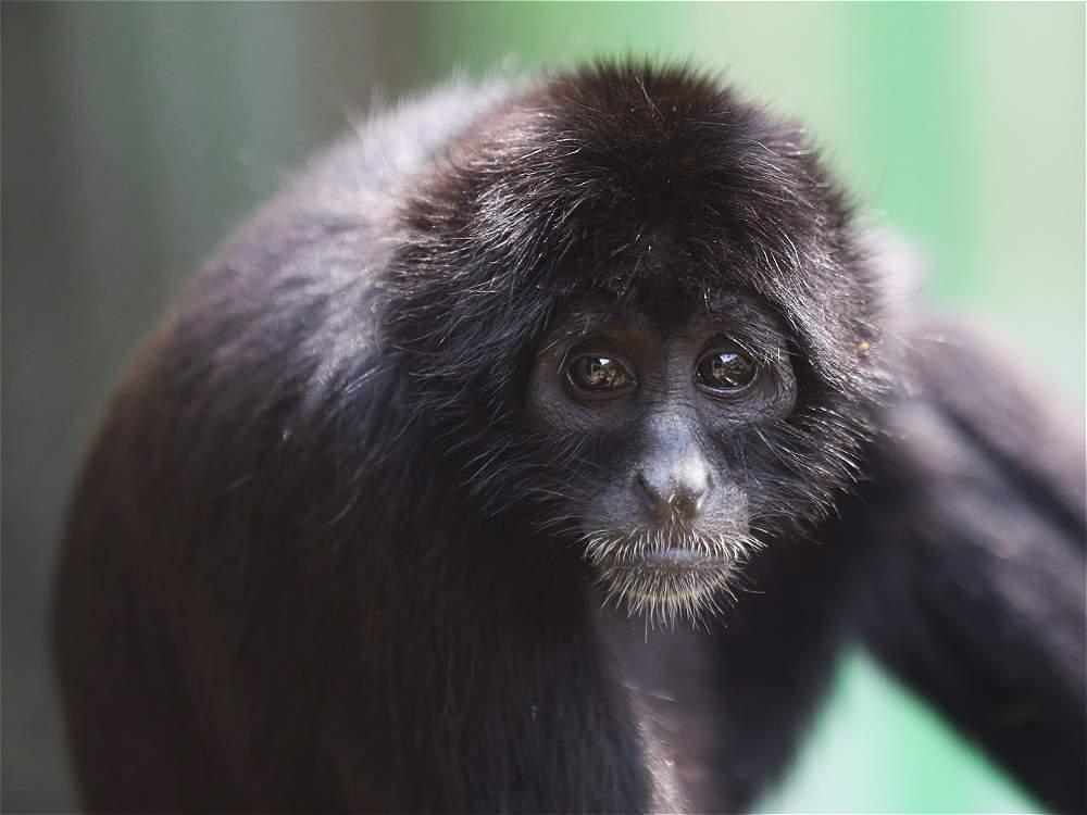 Fotos: Mono Araña