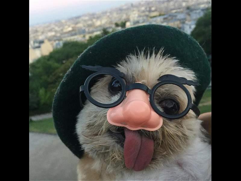 Marnie, la divertida perrita que se ha vuelto viral en las redes sociales