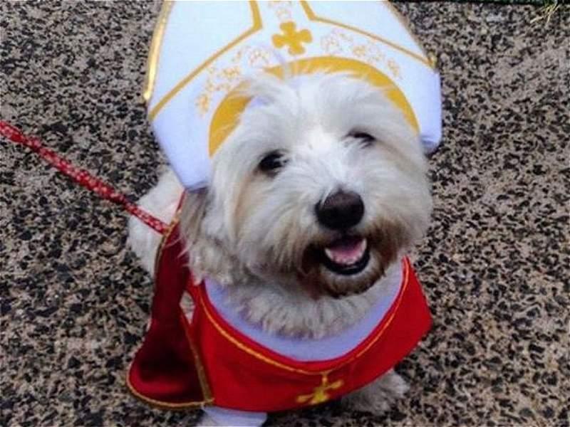 #Popedog: amos de perros llevan su cariño por el Papa al extremo