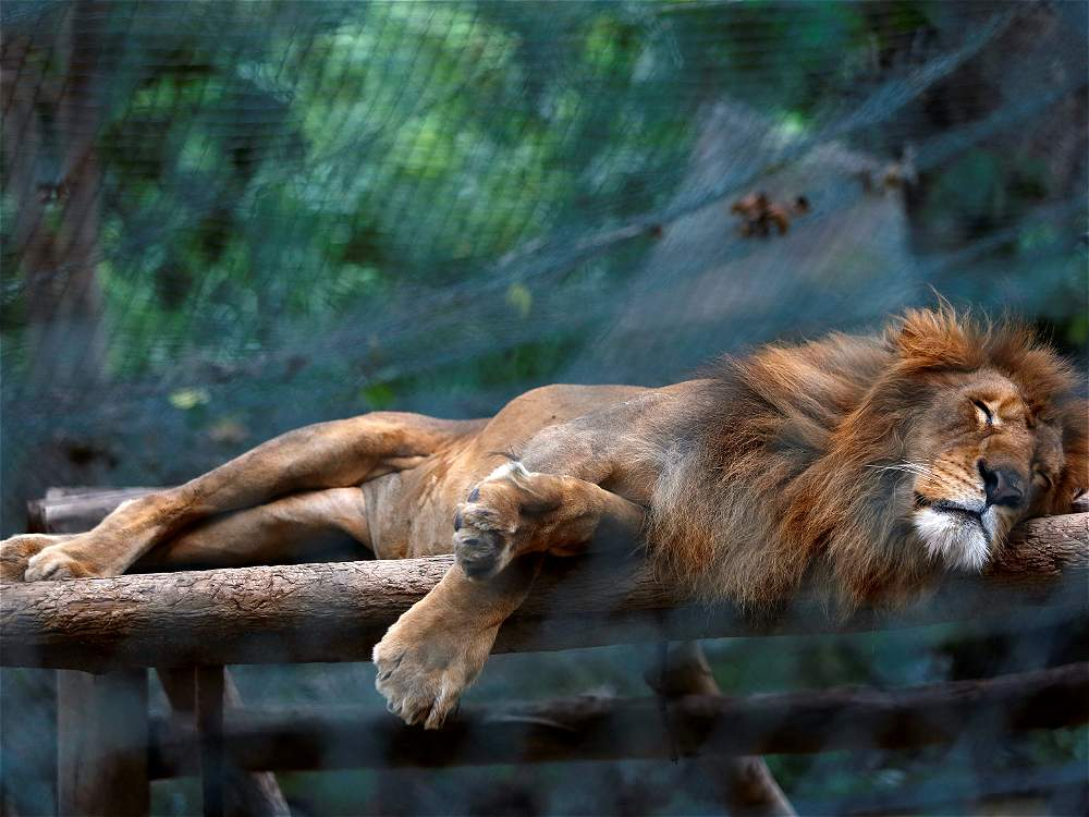 Crisis venezolana afecta animales en zoos
