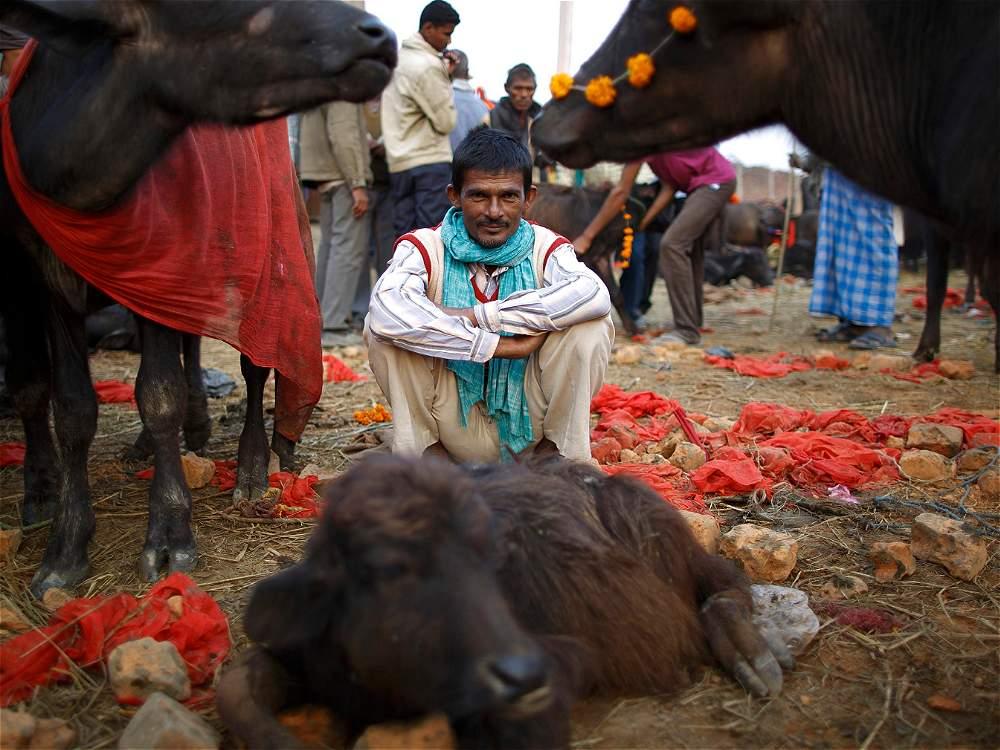 sacrificio de cientos de animales por ritual religioso