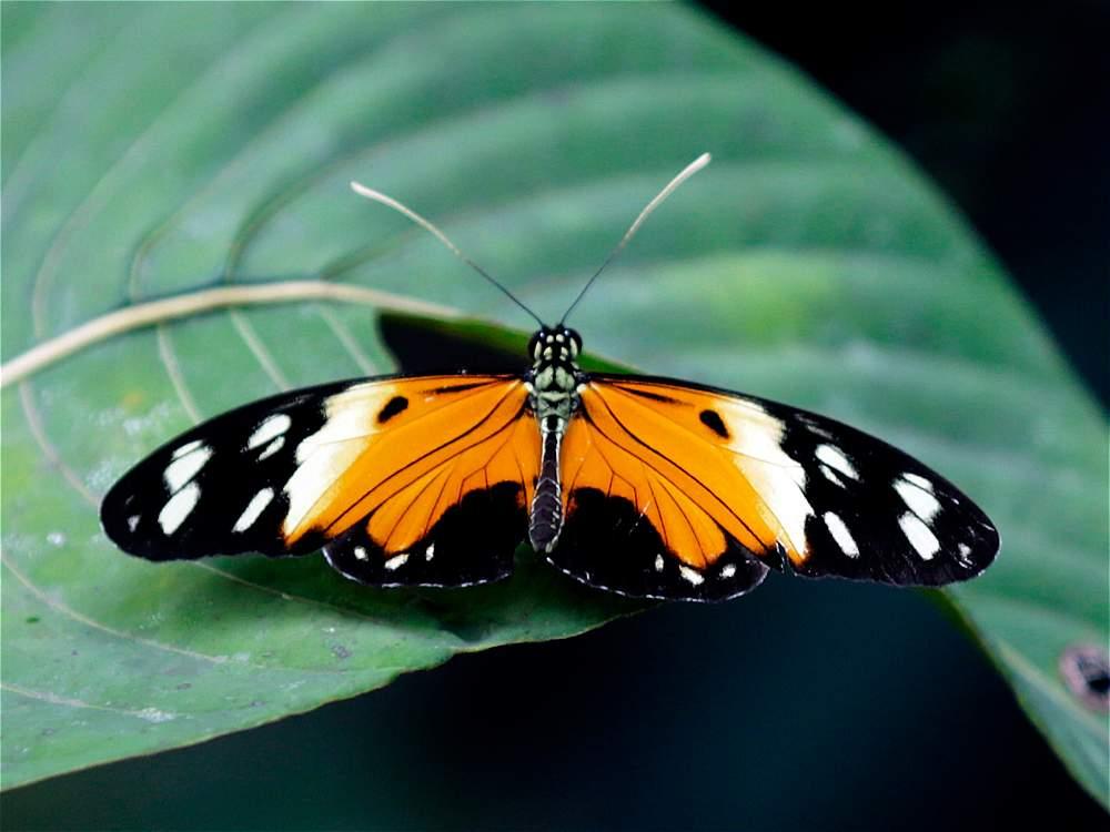 La flora y la fauna de Guainía ofrecen la posibilidad de observar especies únicas.