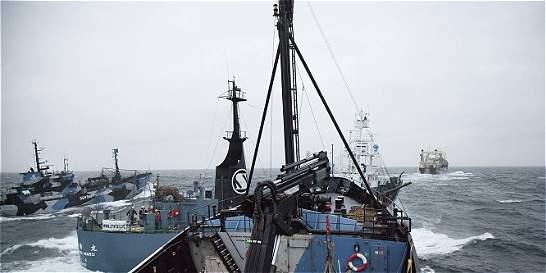 Sea Shepherd llega a un acuerdo con balleneros japoneses