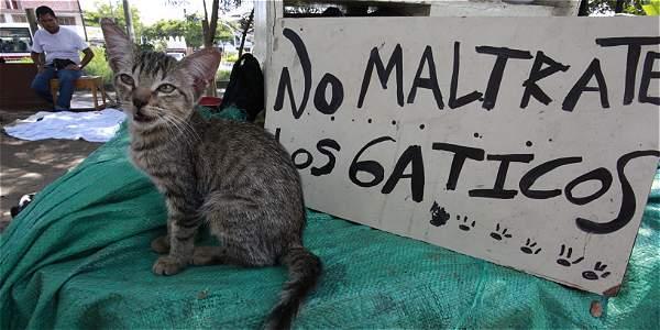 Encerró a sus 14 gatos hambrientos en su casa