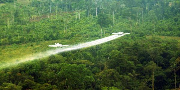 EE. UU. advierte de aumento de cultivos de coca en Colombia