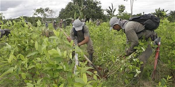 Las hectáreas de cultivos ilícitos en 2016 habría sido de 200.000, de acuerdo con fuentes en EE. UU.