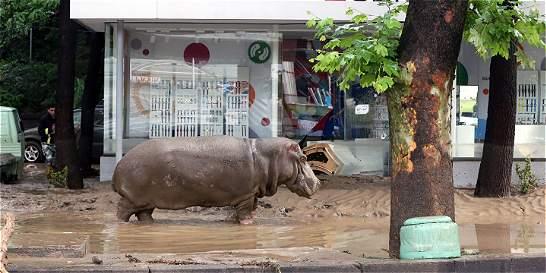 Tiflis, ocupada por las fieras tras inundaciones que dejan 12 muertos