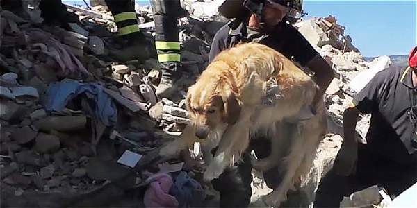 Los bomberos empezaron a retirar escombros y sacaron a la mascota, que no parecía particularmente traumatizada por la experiencia.