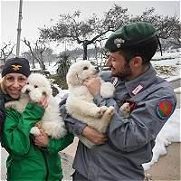 Rescatan tres cachorros en el hotel devastado por avalancha en Italia