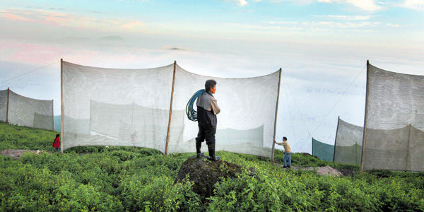Cazan nubes para calmar la sed de Lima (Perú)