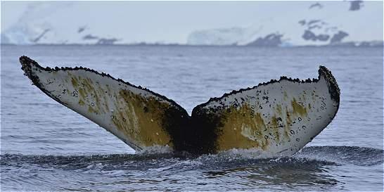 La biodiversidad de la Antártida es más rica de lo que se pensaba