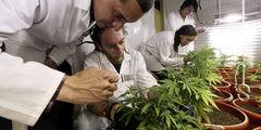 Autorizan la elaboración y venta de medicamentos con cannabis en Chile