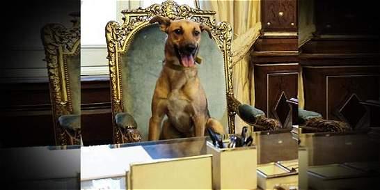 Mauricio Macri sentó a su perro en el sillón presidencial