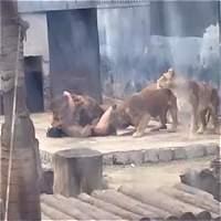 ¿Qué hay detrás del caso del hombre que se enjauló con dos leones?