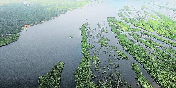 La deforestación en el último año arrasó casi 1.800 kilómetros cuadrados de la mayor selva tropical del mundo.