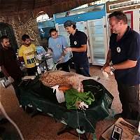 """Una ONG cierra """"el peor zoo del mundo"""" y saca a sus animales de Gaza"""