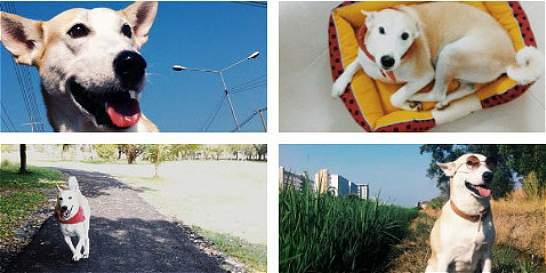 La maravillosa historia de 'Gluta', la 'mascota más feliz del mundo'
