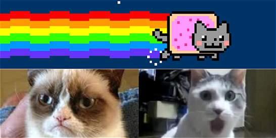 Diez videos virales para celebrar el Día Internacional del Gato
