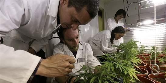 Ley de marihuana medicinal, aprobada en el Congreso
