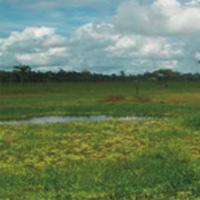 Mafiosos y 'paras' se disfrazan de víctimas para reclamar tierras