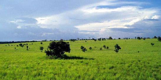Buscan que exsenador fugitivo devuelva cerca de 38.000 hectáreas