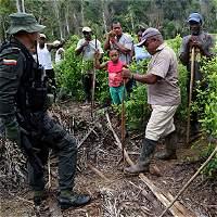 Bloqueos, el obstáculo que preocupa en la erradicación de cultivos