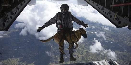El vuelo de los perros paracaidistas de la Fuerza Aérea