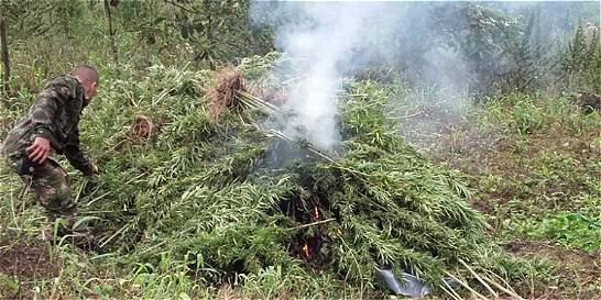 En Meta, cultivos de coca dan paso a la marihuana