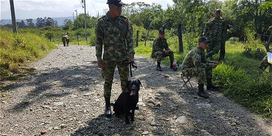 Perro antiexplosivos salvó la vida de 30 militares antes de morir