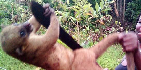Ley contra el maltrato animal, un mes agridulce