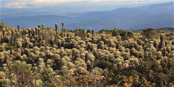 Imágenes de la fauna y flora de los páramos de Boyacá.