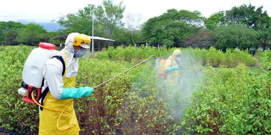 Fumigación ahora será 'mata a mata' de coca