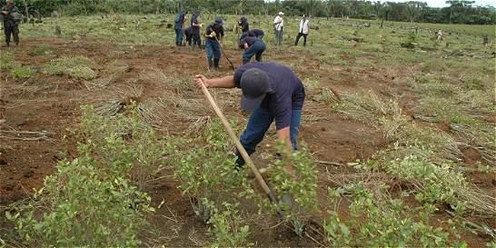 Gobierno se reserva derecho a erradicación forzosa de cultivos