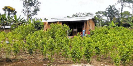 Puerto Asís está listo para sustituir la coca