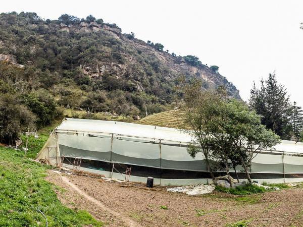 Invernaderos para agricultura orgánica