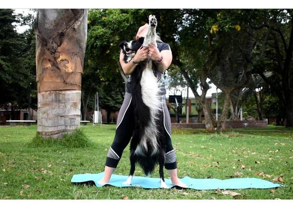 Yoga  para perros 3