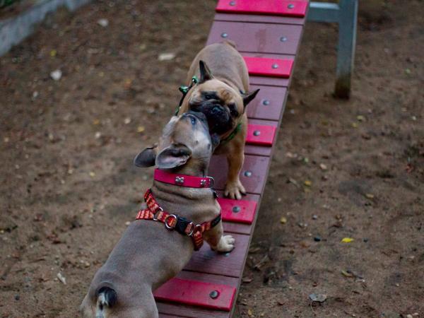 Parque para mascotas