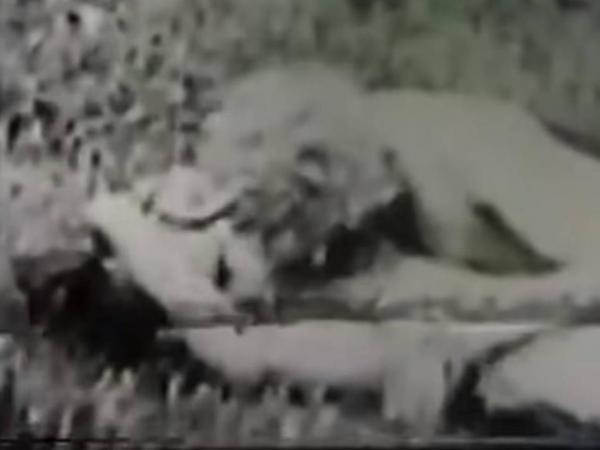 Peliculas porno de principios del siglo xx La Historia De La Primera Pelicula De Porno Cine Y Tv Cultura Eltiempo Com