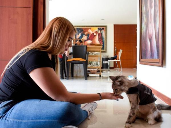 Romeo, gato con marcapasos
