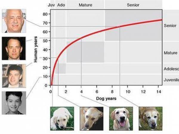 Calculadora de edad de perros
