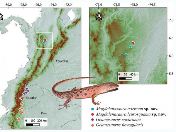 Mapa de magdalenasaura