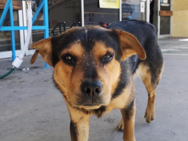 Covito: Un perro ha esperado a su amo, fallecido por covid-19, por un mes - Gente - Cultura - ELTIEMPO.COM