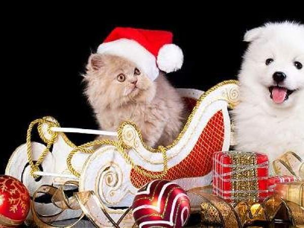 La Navidad puede atormentar a su mascota