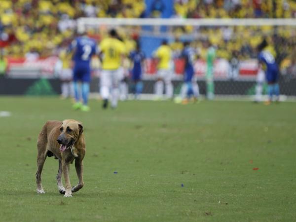 Perro colado en el partido de Colombia vs Brasil