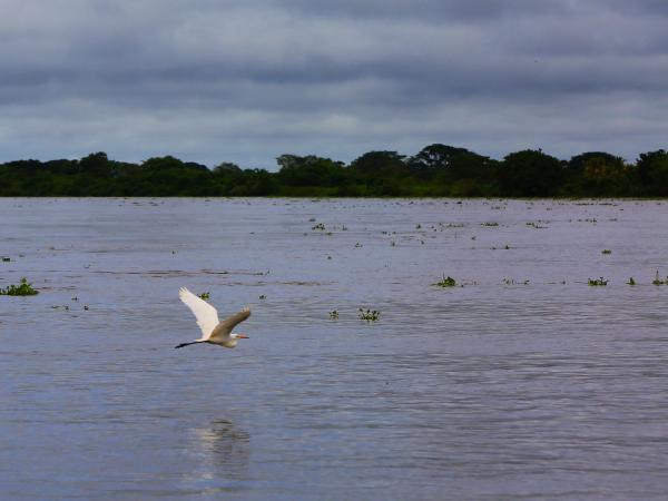 59d434aaa55b9 - Rescate del río Magdalena, un compromiso de todas las regiones