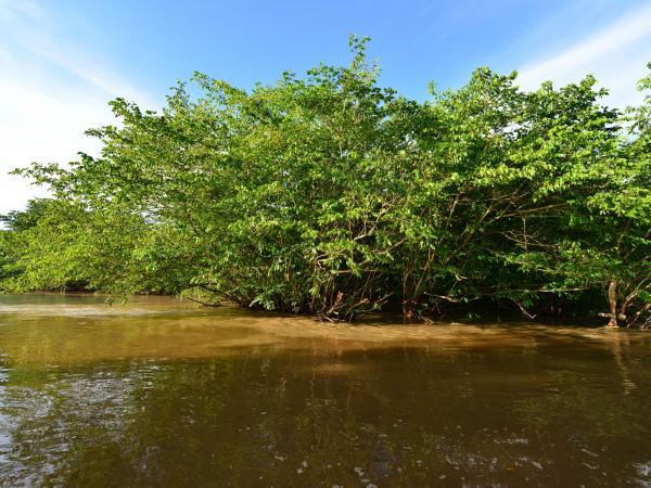 Río Arauca1