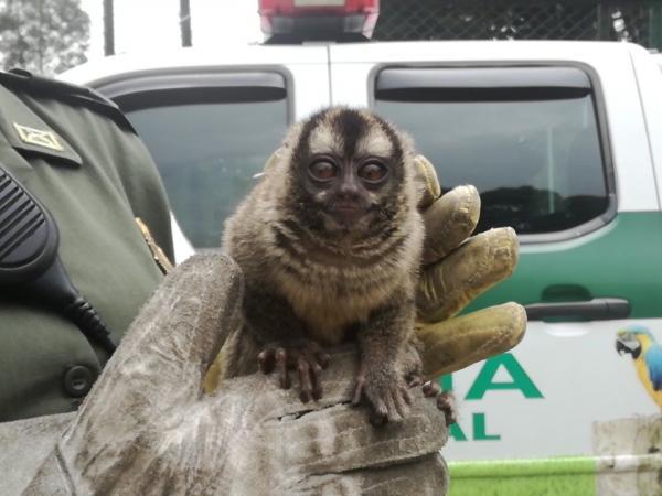 Rescatan un mono titi en Ciudad Bolívar
