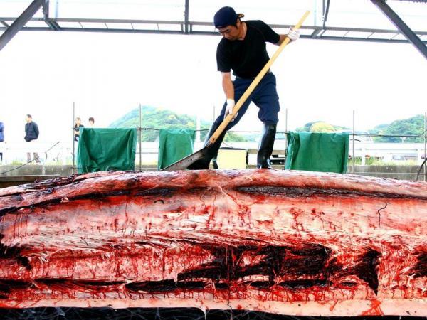 BBC Mundo: Pescador con restos de una ballena muerta