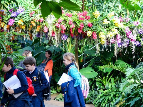 Orquídeas Londres