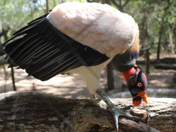 Aves exóticas de Colombia se pueden apreciar en el aviario